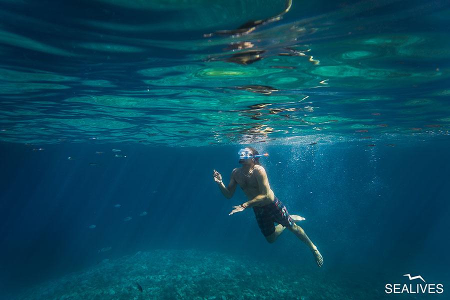 Sealives - Escursioni in Barca Sardegna Alghero Slideshow Home (16)