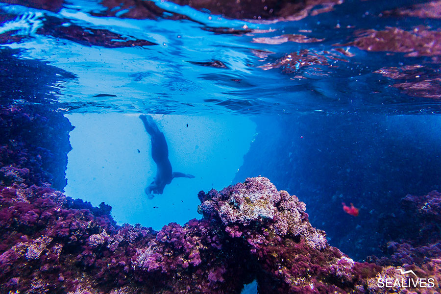 Sealives - Escursioni in Barca Sardegna Alghero Slideshow Home (27)