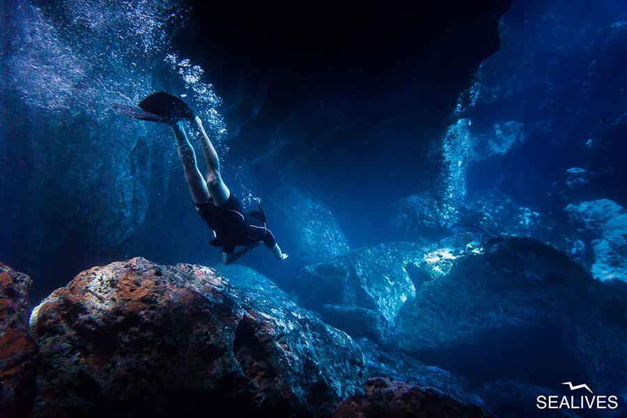 Sealives - Escursioni in Barca Sardegna Alghero Slideshow Home (5)