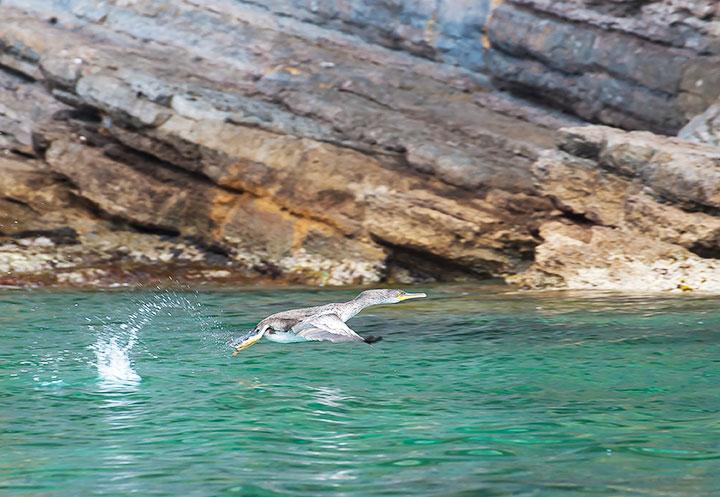 Escursioni in Barca in Sardegna   Sealives